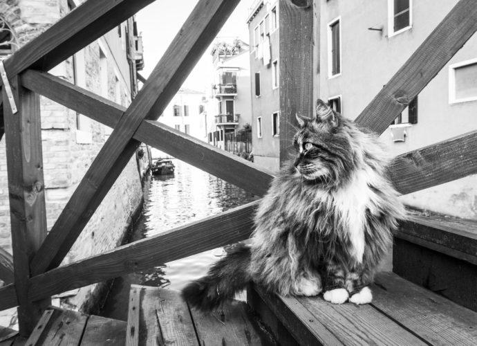 cats in venice marianna zampieri libro gatti veneziani gatte vicentine cosa fare in veneto cosa fare a vicenza eventi notizie veneto notizie vicenza storie di gatti donne vicentine fotografia venezia fotografa vicenza